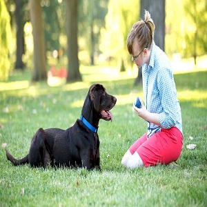 Importance Of Puppy Obedience Training
